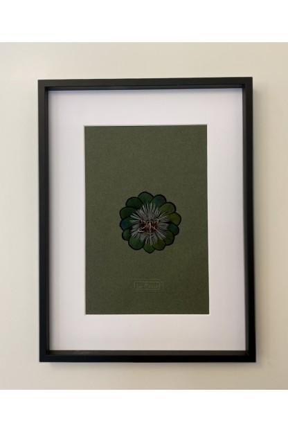 Cadre Plumes : Star Flower