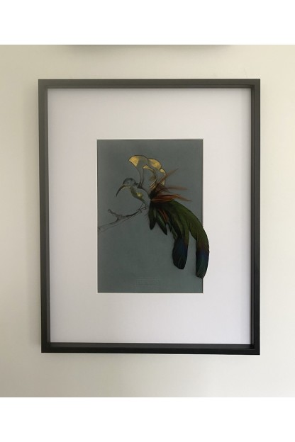 Feather Frame : Bird of Paradise