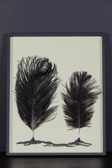 Feathers Frame : Forest Lichen