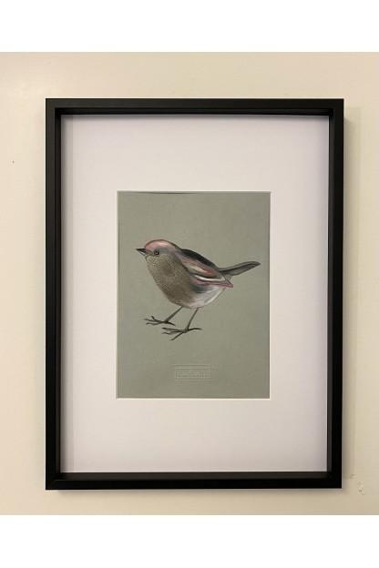 Cadre Plumes : Throated Bird