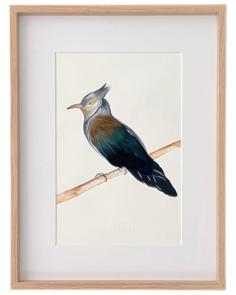 Feather Frame : Birds